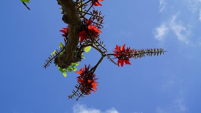 沖縄は「うりずん」の季節です
